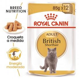 Royal Canin Razas Comida Humida gato