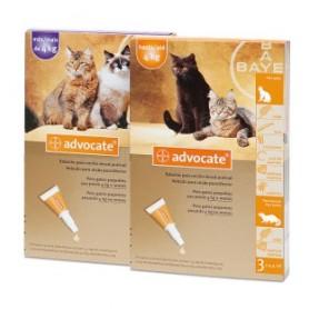 Advocate Feline